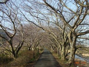 Sakuratunnnel1