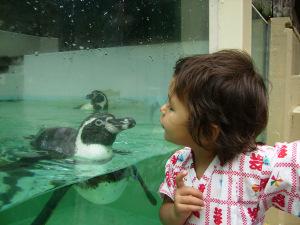 Hi_penguin